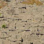 Photo de Ankarana Reserve