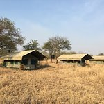 Photo de Ndutu Wildlands Camp