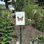 Butterfly garden on premises