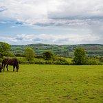 You'll find stunning views at Highdown Farm