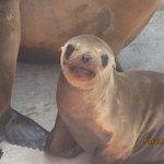 Pacific Marine Mammal Center Foto