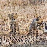 Cheetah family seen in Ndutu