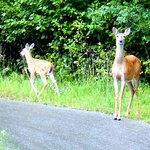 Paul Bunyan State Trail Foto