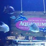 entrada al acuario