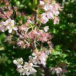 Flowering shrubs in the Wildlife Refuge
