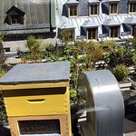 the bee hive and rooftop garden!