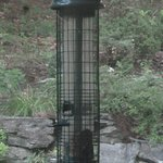 Bird-feeder recommended by the Audubon Society