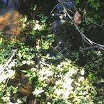 Sawgrass Lake Park Foto