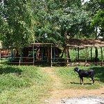 Cottage area