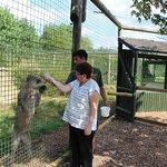 Feeding the Puma