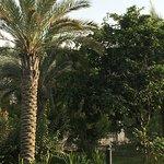 Foto de Centro Sharjah