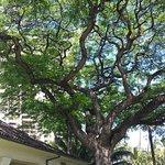 Honolulu Museum of Art Foto