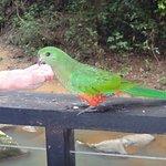 Foto de The Canopy Rainforest Treehouses and Wildlife Sanctuary