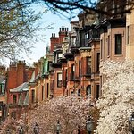Back Bay Cherry Blossoms