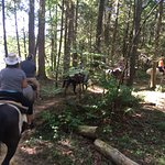 Smokey the Mule and I rode thru the forest.