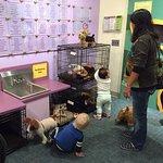 Adopt a pet area.