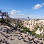 Pigeon Valley Foto