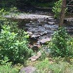 Foto de Smoky Mountain River Rat