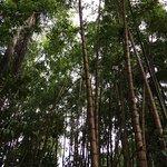 Photo de Jardin Botanico de Medellin