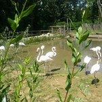 Foto de Zoo Brno