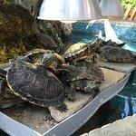 Hubland, seine Schildkröten und die große Terrasse