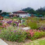 Ragged Point Inn and Resort Foto