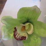 Photo de Lemon Leaf Cafe
