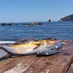 I nostri pesci