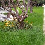 Photo de Jardin d'Inès