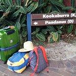 Foto de Tangalooma Island Resort
