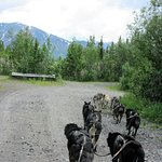 Great scenery - view from the dog cart, June 2016