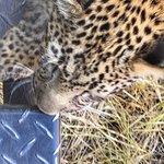 andBeyond Sandibe Okavango Safari Lodge Foto