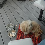 Our spoiled dog with the Frozen Yogurt Peanut Butter Balls
