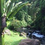 Foto de Trogon Lodge San Gerardo de Dota