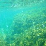 Bolinhas saem dos corais de Champagne Reef