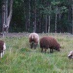 Alaska's Harvest B&B Foto