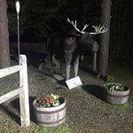 Foto de Pemi Valley Moose Tours