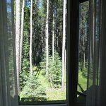 View from the window at Cypress Hills