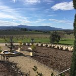 Yarra Valley Private Winery Tours Foto