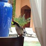 Photo de La Palmeraie Hotel