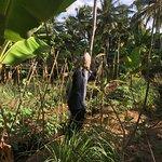 Hotel's own veg and fruit farm