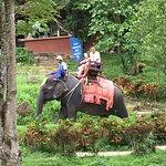 Photo of Kok Chang Safari Elephant Trekking