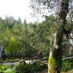 Meadowood Napa Valley Foto