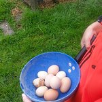Collect eggs for breakfast - a great educational experience for young city kids