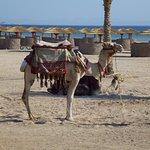 Wer will kann Kamele reiten