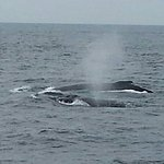 Photo de Capt Bill & Sons Whale Watch