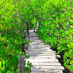 Wasini Womens Group Boardwalk (Coral Garden)