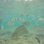 Snorkeling at Poipu