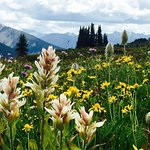 Biggest alpine meadow in North America