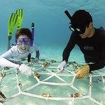 Coral Propagation Programme